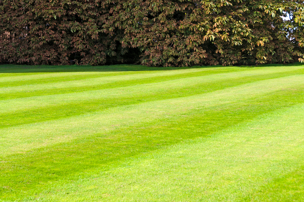 Refresh Your Yard With Professional Lawn Maintenance